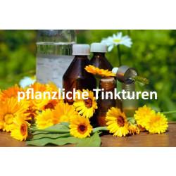 Pfefferminzblätter (Mentha piperita) Urtinktur 100ml Individualrezeptur
